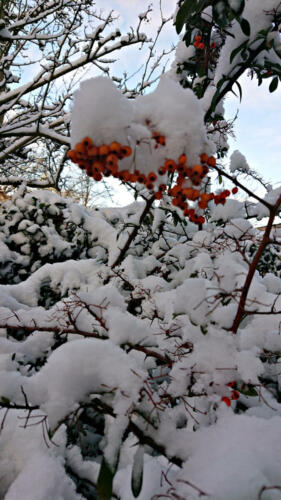 Wedel, Winter 30.01.21 0930